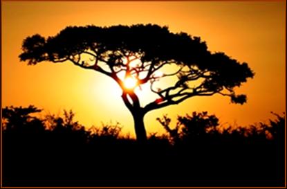 swazi tree